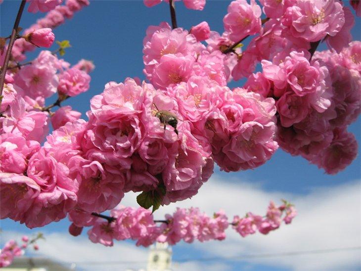 Фото самых красивых цветов в мире на весь экран